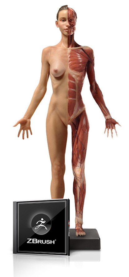 Female Medical Figure and ZBrush Bundle