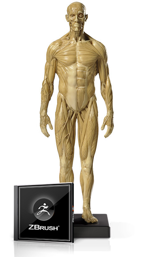 Male Anatomy Figure v1 1/6 Scale and ZBrush Bundle