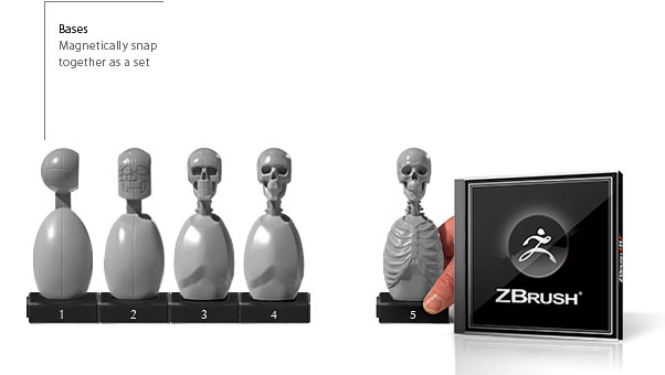 Skeleton Torso 5 Piece Magnetic Set and ZBrush Bundle