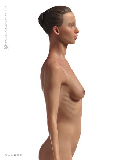 Pixologic > Anatomy Tools Reference Figures > Anatomy Tools Female ...