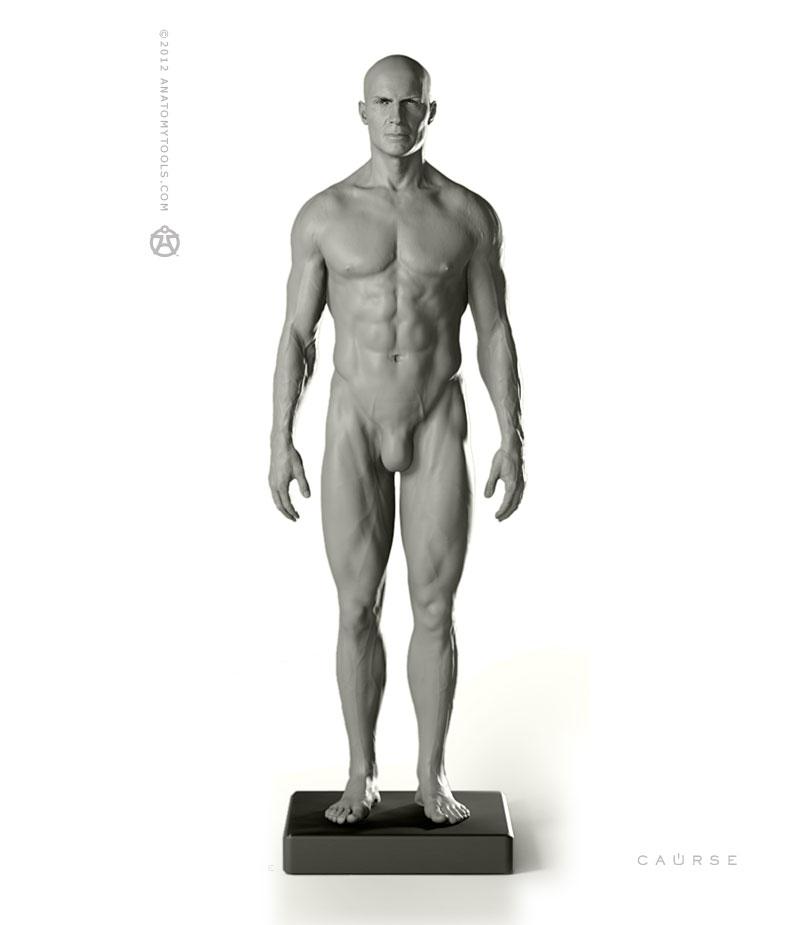 Pixologic > Anatomy Tools Male Proportional Figure 1/6 Scale