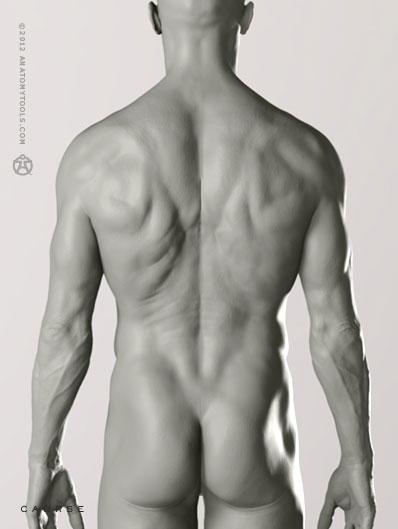 pixologic anatomy tools zbrush bundle male proportional figure