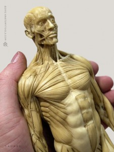 Anatomy Tools Male Anatomy Figure v1 1/6 Scale