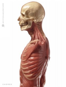 Anatomy Tools Male Medical Figure