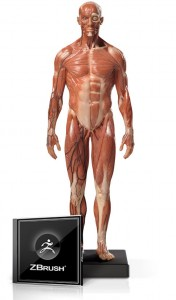 Male Anatomy Figure 1/6 Scale and ZBrush Bundle