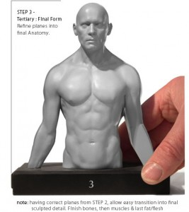 Anatomy Tools Male Torso 3 Piece Magnetic Set