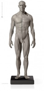 Anatomy Tools Male Flesh/Anatomy 1/6 Scale Fig. 2
