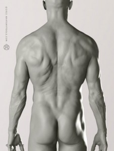 Male Proportional Figure 1/6 Scale and ZBrush Bundle